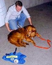 Search and rescue dog receives treatment at the Javits Center. - Copyright – Stock Photo / Register Mark
