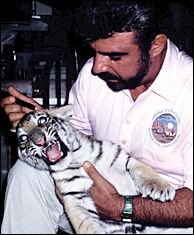 Dr. Amaro treating a Siberian tiger.