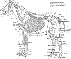 horse chart - Copyright – Stock Photo / Register Mark