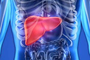 liver - Copyright – Stock Photo / Register Mark