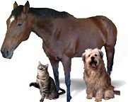 A horse, a domesticated dog and a cat. - Copyright – Stock Photo / Register Mark