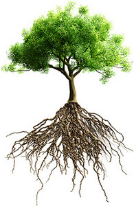 roots - Copyright – Stock Photo / Register Mark